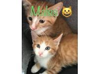 Kittens 🐾😻 £70 each!