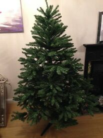 Tree Christmas Norwegian Grand Fir