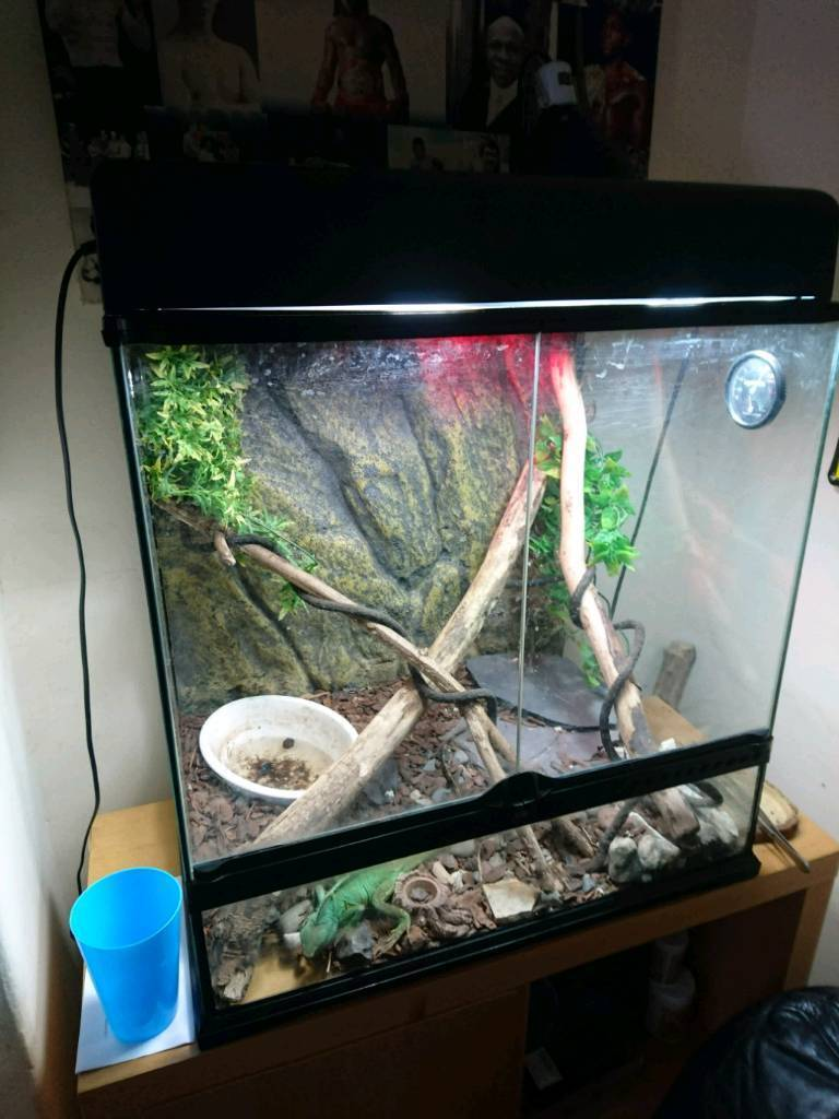 Exo terra full water dragon setup
