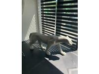 Silver cracked mirror 6ft panther