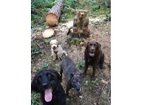 Professional Dog Walking Service in Sheffield for your four legged friend