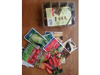 Selection of seeds and pot strips