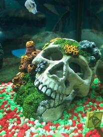 Aquarium skull for sale