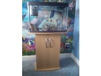 2 ft fish tank with accessories