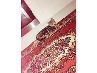 I have kitten female is 8 weeks old Is full training Is tabby Kitten