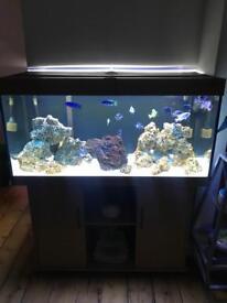 Fish tank set up 350 liters BARGAIN