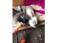 2 female rabbits