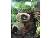 4ft fresh water fish tank