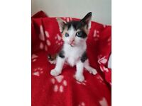 3 Lovely Kittens ready 21st May