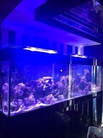 tmc v2 ilumenair 1200 and 900 marine led lights