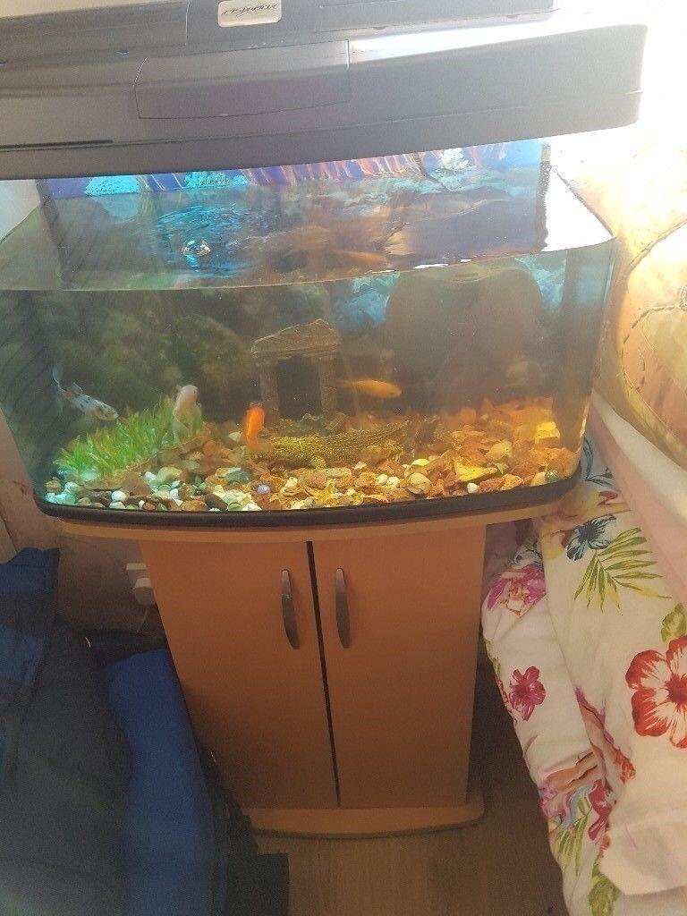 aquarium tank with stand+extras