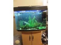 68 litre fish tank for sale with matching stand. Full tropical set up