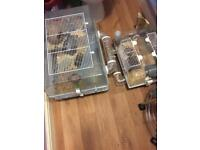 2 hamsters with cages