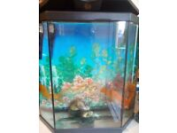 Fishtank with 3 goldfish for sale