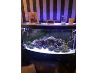 4ft Fluvial bowed marine fish tank