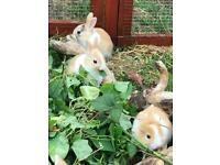 Bunnies awaiting their forever home