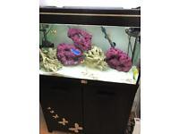 Marine fish tank full set up
