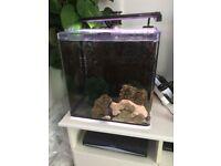 Marine Saltwater Aqua One Aquanano 40 + Skimmer Full Set Up fish tank aquarium coral