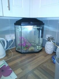 Great modern fish tank