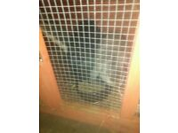 Two friendly rabbits and double hutch for sale