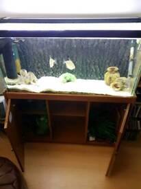 Aquarium + fish.