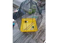 Parrot - bird cage reduced