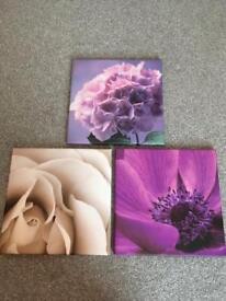 Flower canvasses