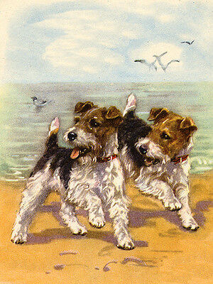 WIRE FOX TERRIER CHARMING DOG GREETINGS NOTE CARD TWO CUTE DOGS ON THE BEACH