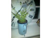 vintage French blue enamel metal toilet brush holder,jug, planter herb plant pot