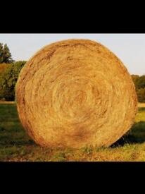 Hay and haylage for horses