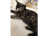 Girl kitten