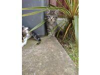 Kittens to loving home