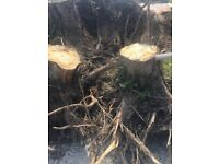 FREE Fire Wood - Large Tree Sumps / Roots with plenty of wood for logs