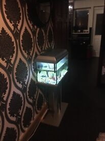 Tropical fish tank with fish full set up