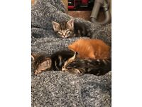 kittens for loving homes