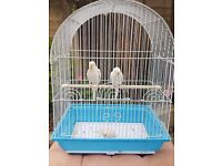 ALBINO BABY BUDGIES PAIR, RED EYES, 8 WEEKS OLD, LOVELY PAIR, SEMI TAME, DO NOT BITE, CAGE
