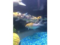 40l fish tank including fishes