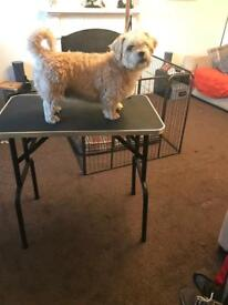 Solid dog grooming table