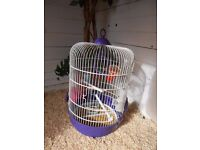 BABY BUDGIE complete with cage and accessories only 9 weeks old ideal for finger training