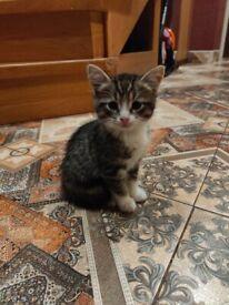 Adorable tabby kittens