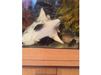For sale tropical fish convit