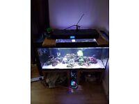 200 litre marine fish tank full set up