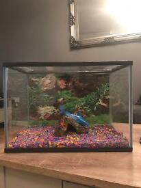 Fish tank 24 litre and fish