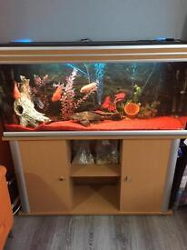 4 Foot Fish Tank For Sale