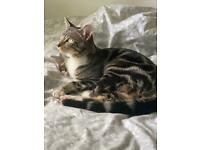 Beautiful male cat for rehoming