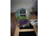Fluval Chi 19L Fish Tank with Filter, Heater, Gravel, Ornaments, Tap Safe etc