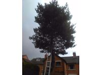 TREE SURGEON-GARDEN SERVICES/HEDGES.Den-07340-357-323