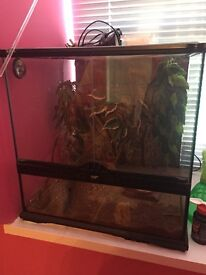 Crested Gecko 18 mths old with Complete Vivarium