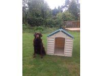 Large dog's kennel