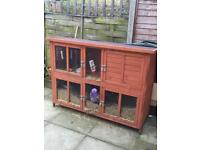 Rabbits & large Hutch